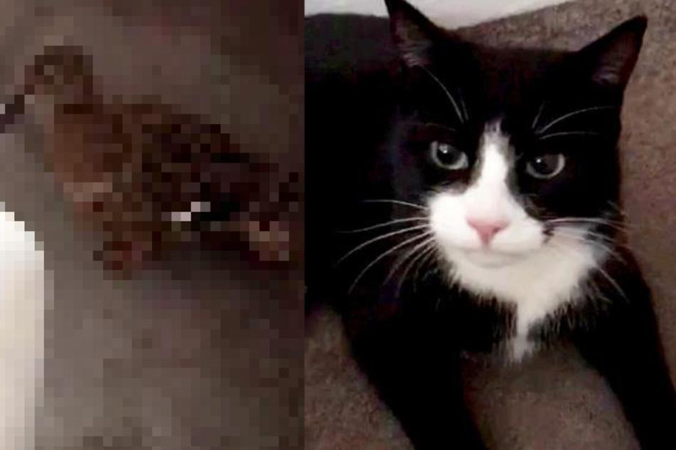 Katze hinterlässt Besitzern erstaunliche Beute