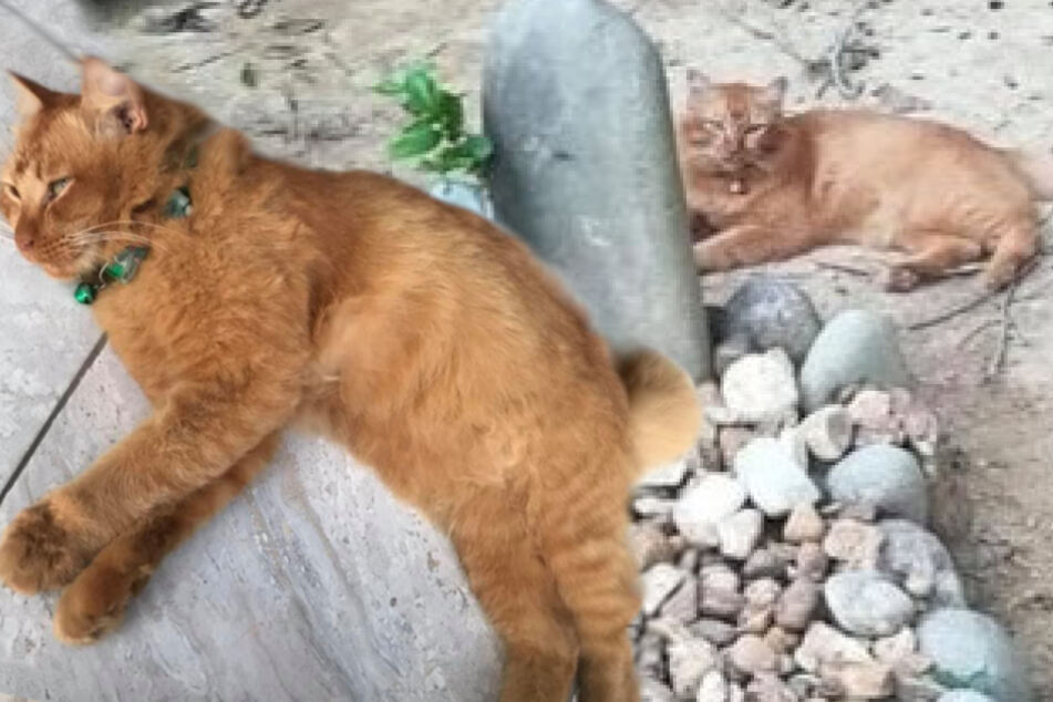 Cat visits owner's grave every day for two years after he died