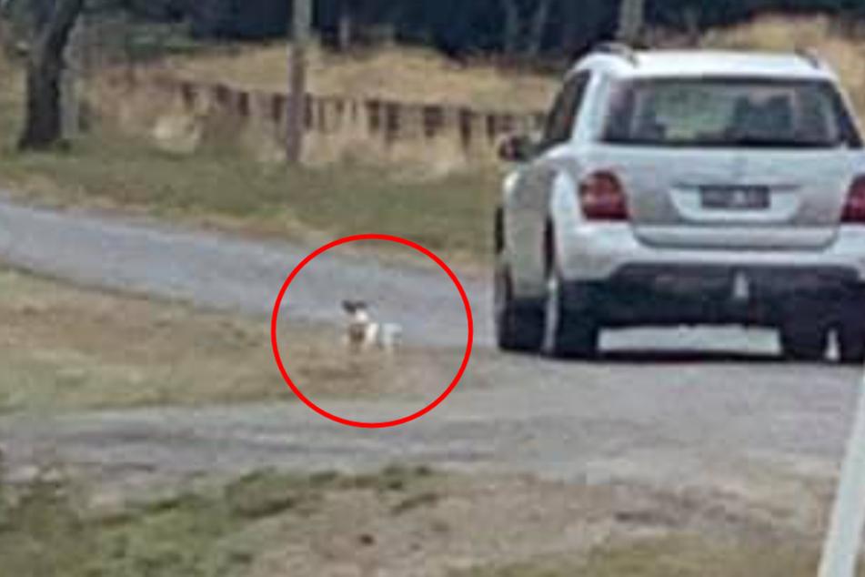 Dieser Hund lief dem Mercedes verzweifelt nach.