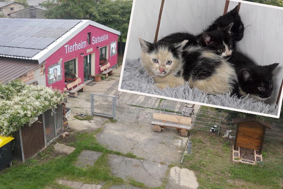 Eiskalt über Zaun geworfen! Vier durchgefrorene Katzenbabys vor Tierheim gefunden