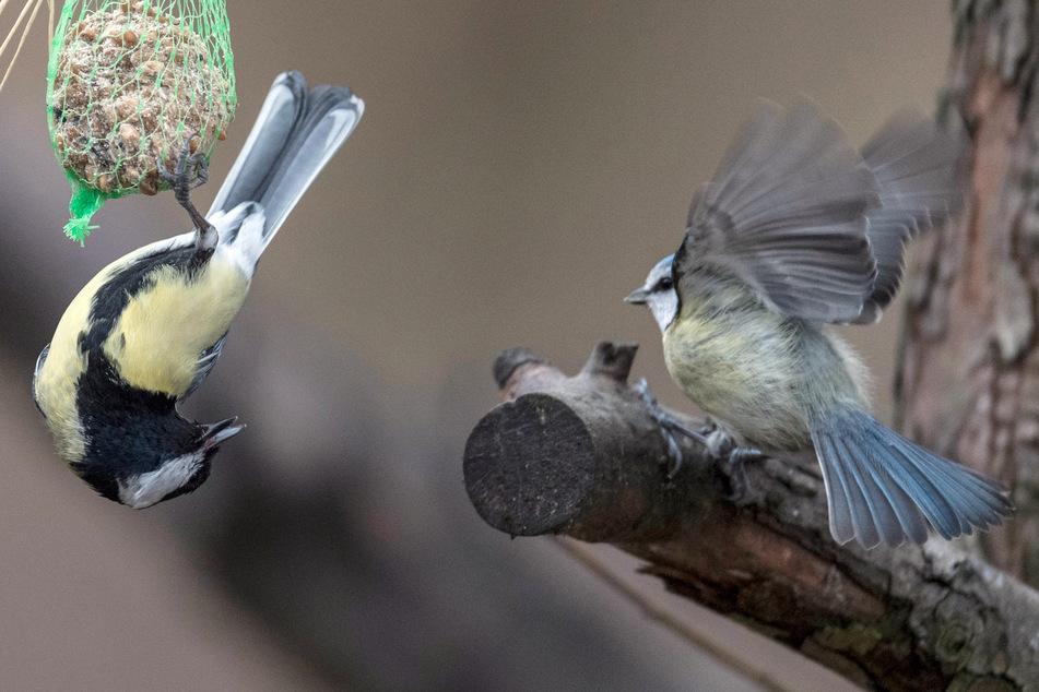 Tausende Tiere verendet: Mysteriöses Vogelsterben aufgeklärt