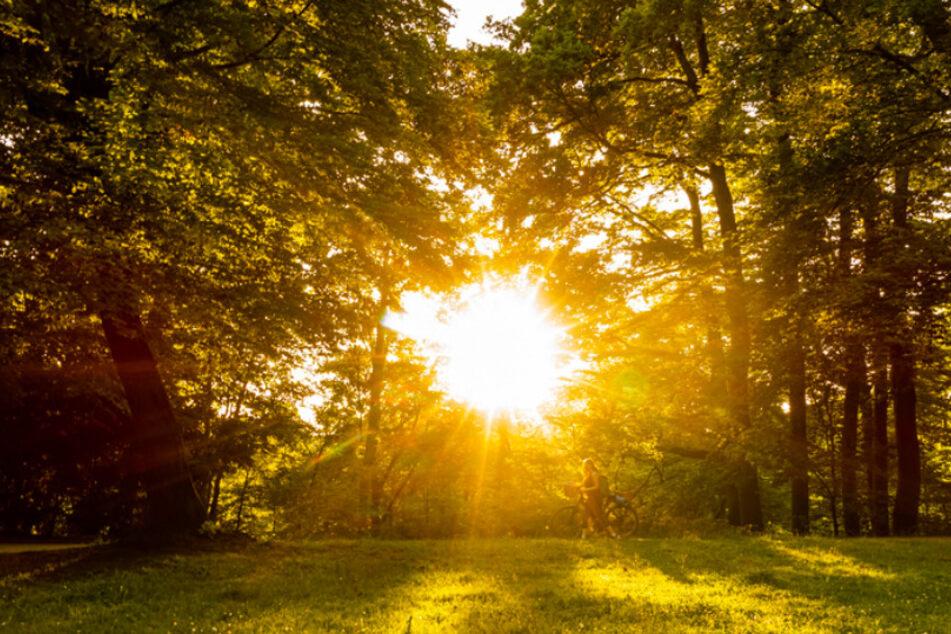 Bei erhöhter Sonneneinstrahlung, wie hier in München, trocknet der Boden extrem aus.