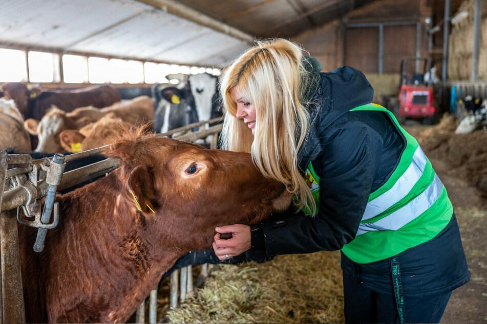 Conny Böttger und ihre Mitstreiter bewahren Rinder vorm Schlachter, schenken den Tieren ein schönes Zuhause bis an deren Lebensende.