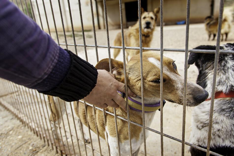 Die Nachverfolgung der Anbieter von Hunden sollte auf jeden Fall möglich sein.