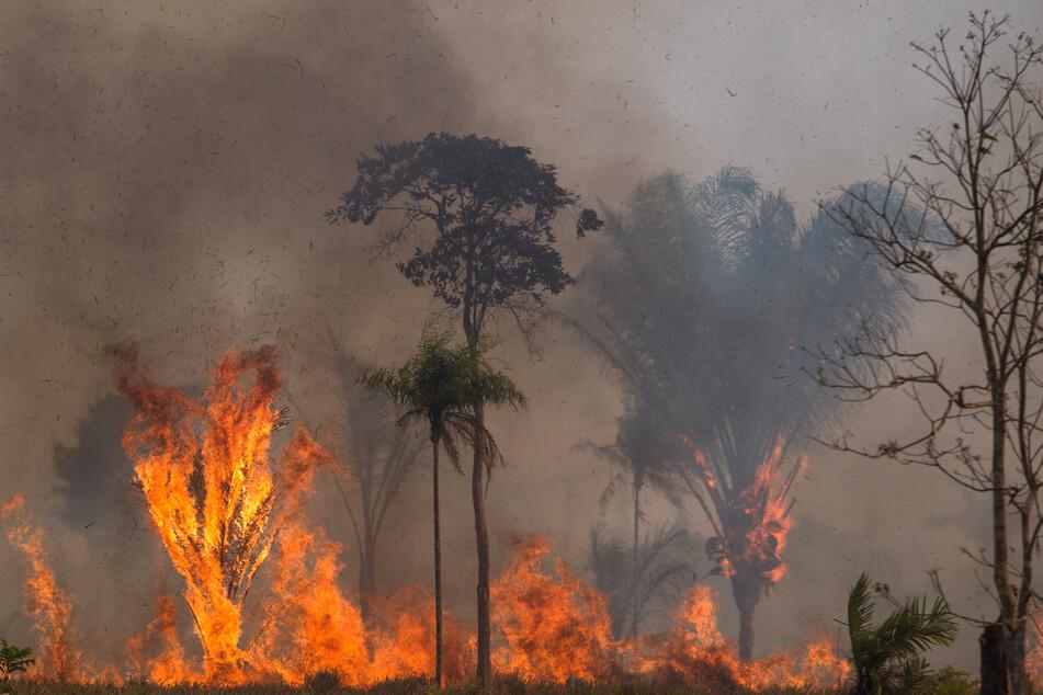 Ein Waldstück im Amazonas-Gebiet steht in Flammen.