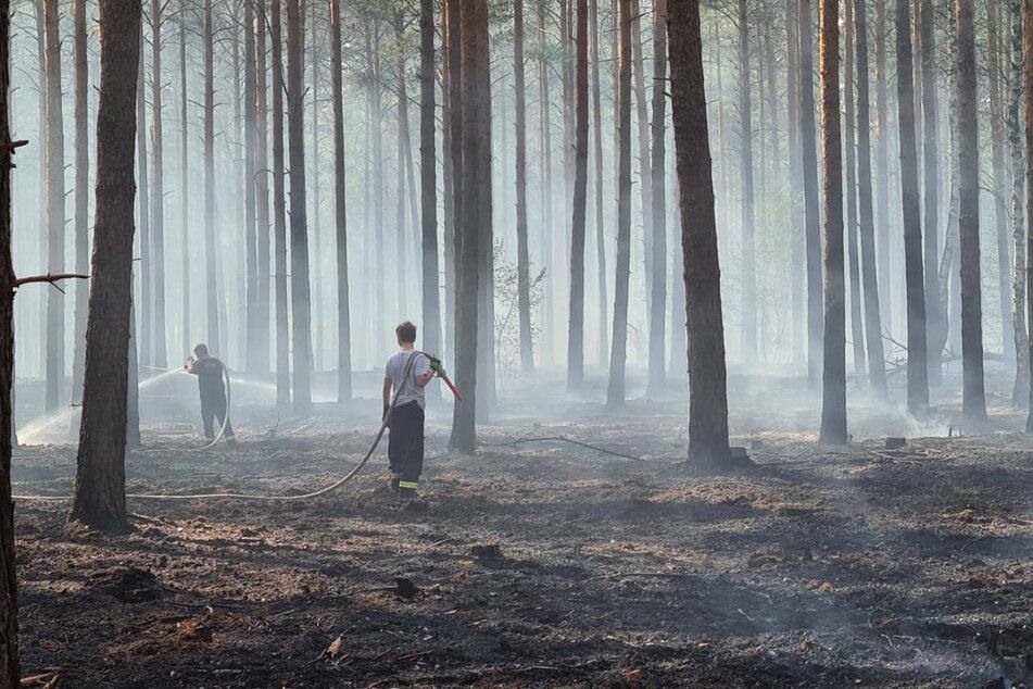 Feuerwehrleute löschen einen Brand in Baruth, wo am Dienstag zwei Hektar Wald in Flammen standen.