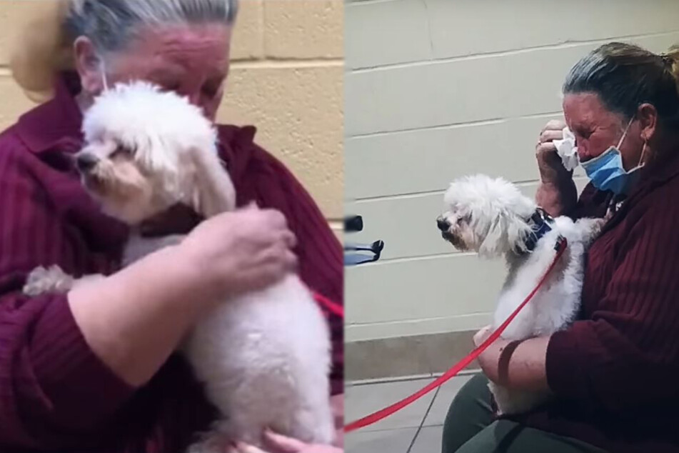 Woman bursts into tears when she sees a little dog: the reason is heartwarming