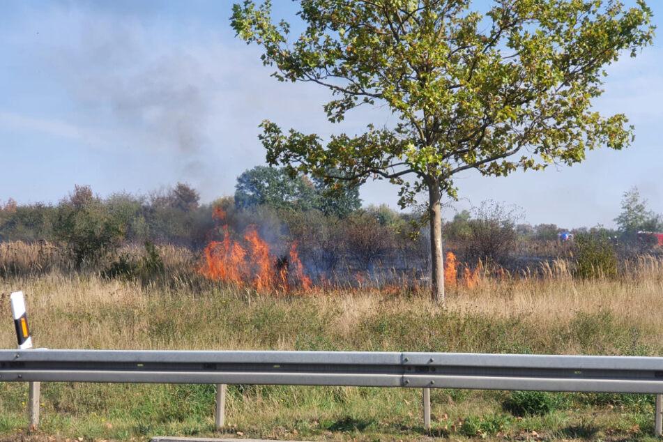 Bei dem Feuer sind etwa 2000 Quadratmeter Wiese abgebrannt.