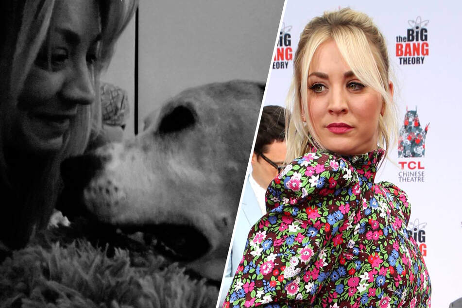 Actress Kaley Cuoco (35) must now cope with the loss of her beloved dog Norman (collage).