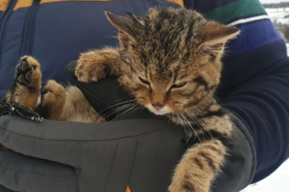 Diese Katze fand Peter Macnab im schottischen Cairngorms National Park.
