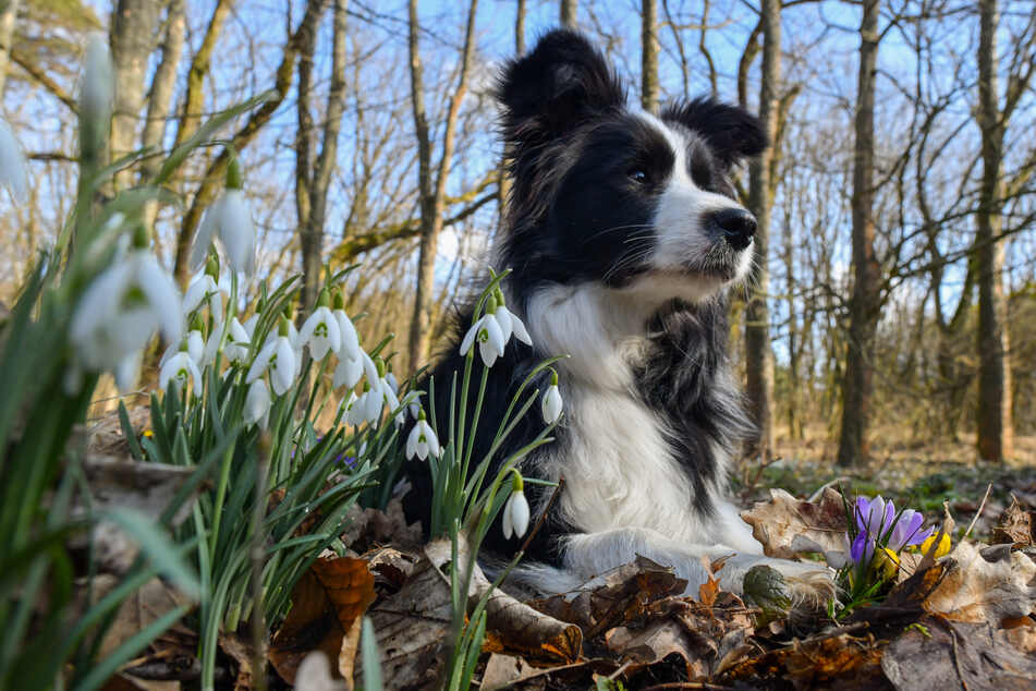 Hund findet hilflosen und verletzten Mann in Gebüsch!