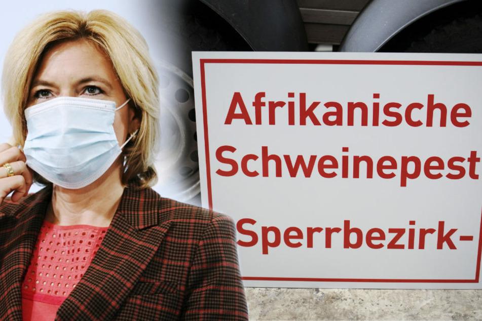 Bundesagrarministerin Julia Klöckner (47, CDU) gab am Donnerstag auf einer Pressekonferenz bekannt, dass sich der Verdacht auf die Afrikanische Schweinepest in Deutschland bestätigt hat.