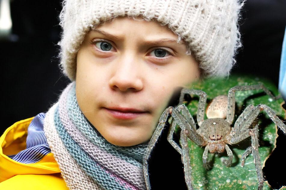 Darum heißt diese Spinne genauso wie Greta Thunberg