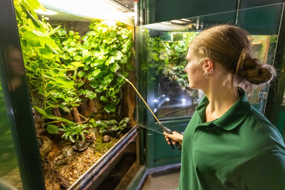Warme Dusche für den Mini-Regenwald: Sara muss die Terrarien in Schuss halten.