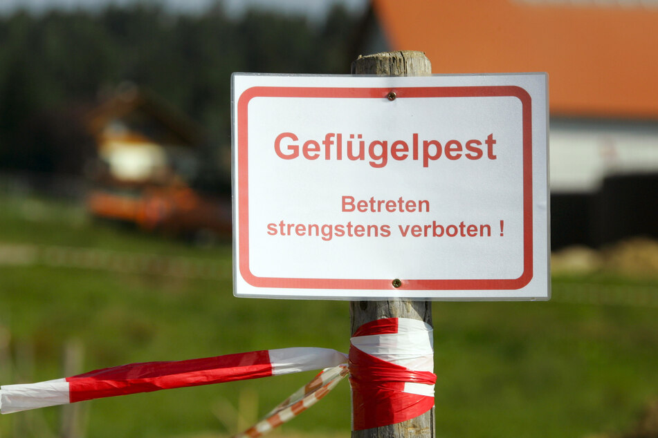 Geflügelpest im Vogtland: Stallpflicht angeordnet!