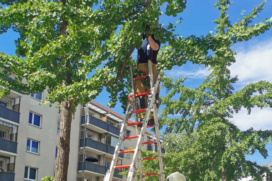 Dresden: Dramatische Rettung: Feuerwehr holt Distelfink vom Baum, doch es endet tragisch