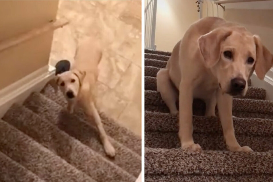 His legs may be longer these days, but stairs are still a chore.