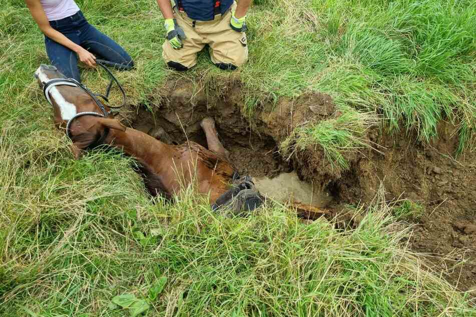Nur der Kopf des Pferdes schaute nach dem Unfall noch aus dem Loch.