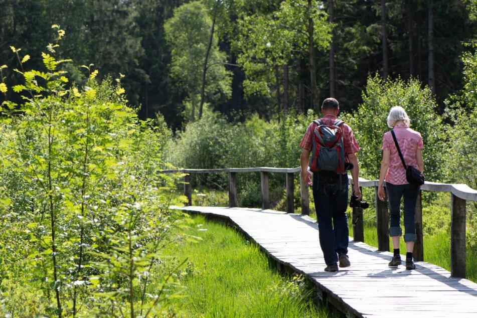 Zwei Wanderer gehen über einen Steg durch Hochmoor Mecklenbruch im Solling.