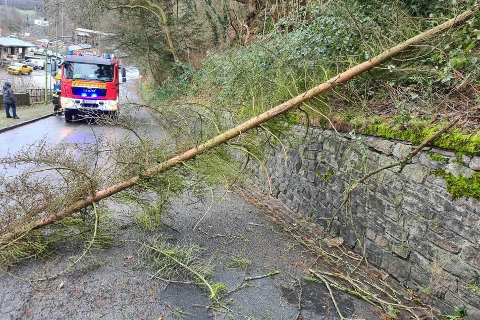 """Die Hauptstraße in Wetter wurde durch einen umgestürzten Baum blockiert. Die Feuerwehr musste wegen Sturm """"Hermine"""" vielerorts in NRW ausrücken."""