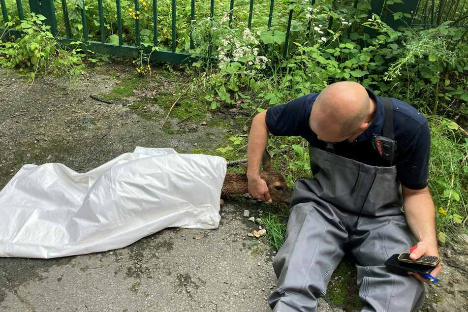 Ein Reh ist mit einer Folie abgedeckt worden und liegt neben einem Feuerwehrmann.