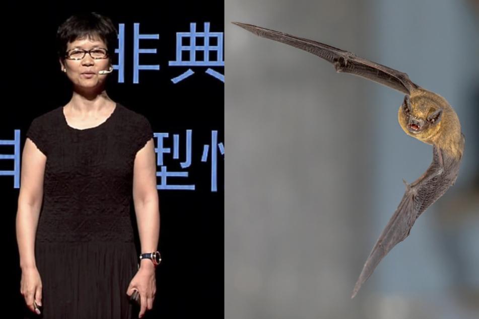 """Die Virologin Shi Zhengli ist quasi der Christian Drosten Chinas. Im Reich der Mitte wurde sie als """"Fledermaus-Frau"""" berühmt."""