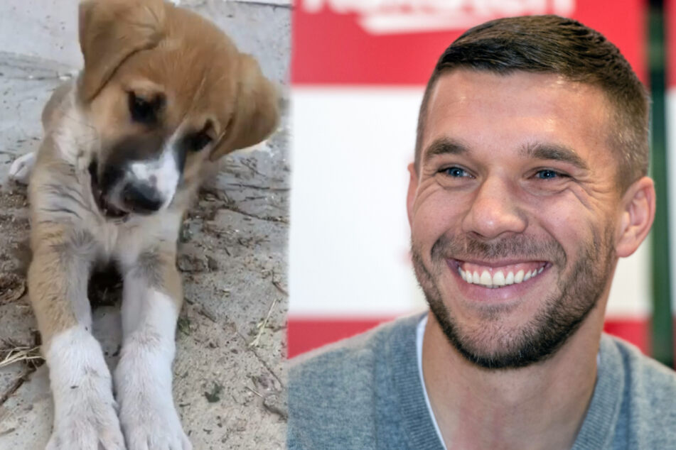Lukas Podolski kriegt tierische Verstärkung