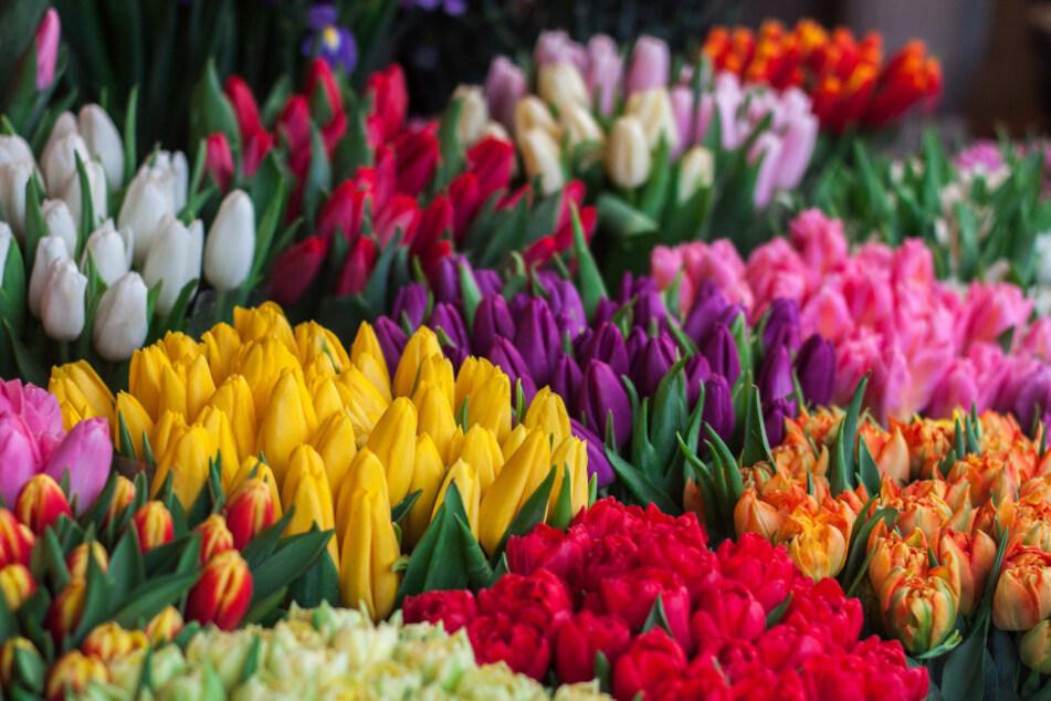Auch Blumen gibt es ohne Mitarbeiterausbeutung, Pestizide und Co.