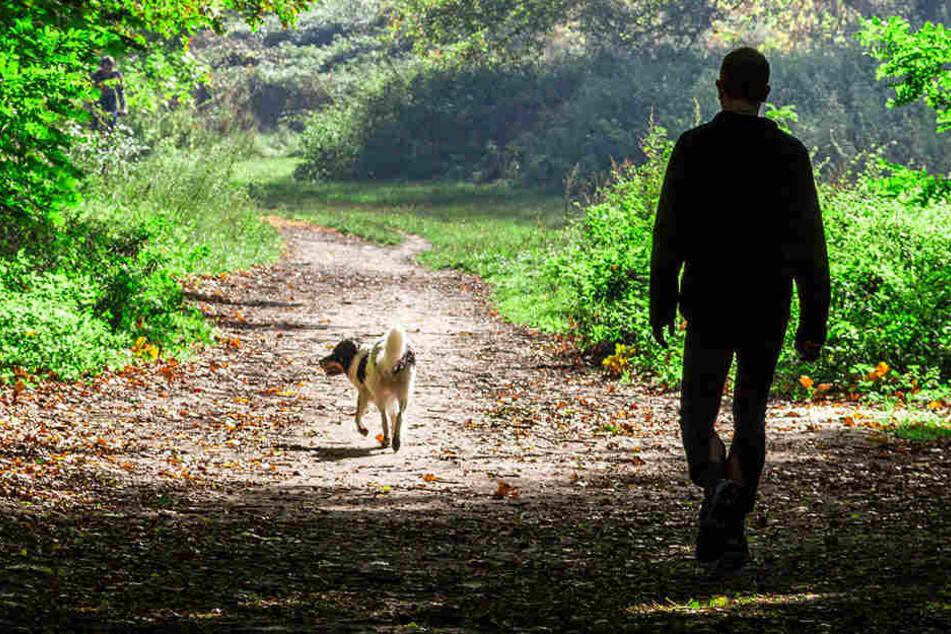 In einem Park in Nordhausen ist ein Streit um freilaufende Hunde eskaliert. (Symbolbild)