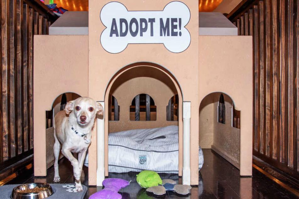 Ein Hund in der Adoptions-Hütte des Hotels.