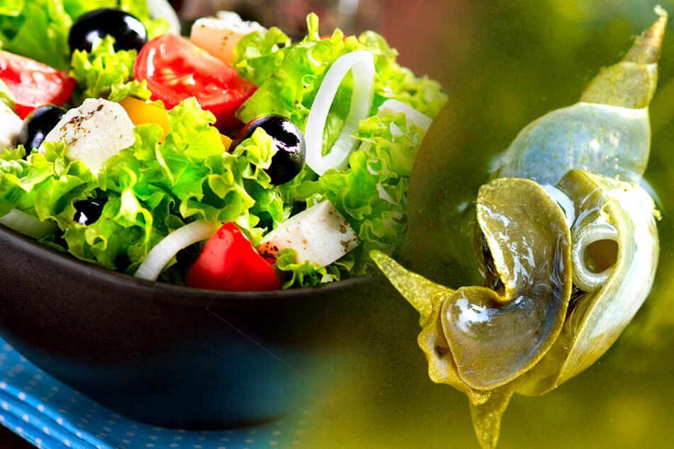 Der Leberegel kann durch den Genuss von rohen Salaten, von Gemüse und wildwachsenden Pflanzen übertragen werden.