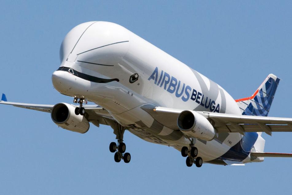 Airbus-Transportflugzeug BelugaXL absolviert Jungfernflug
