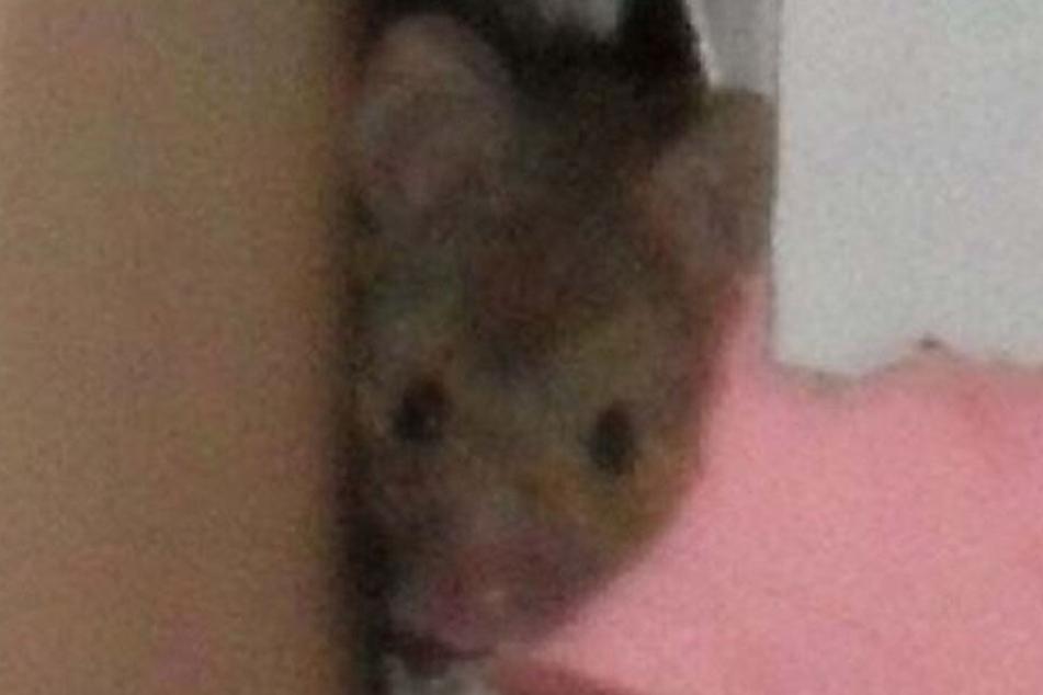 Wer stört denn da: Eine Maus beäugt die Lebensmittelkontrolleure.