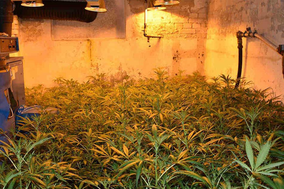 Das ganze Haus war mit Wärmelampen für die Aufzucht der Pflanzen ausgestattet.