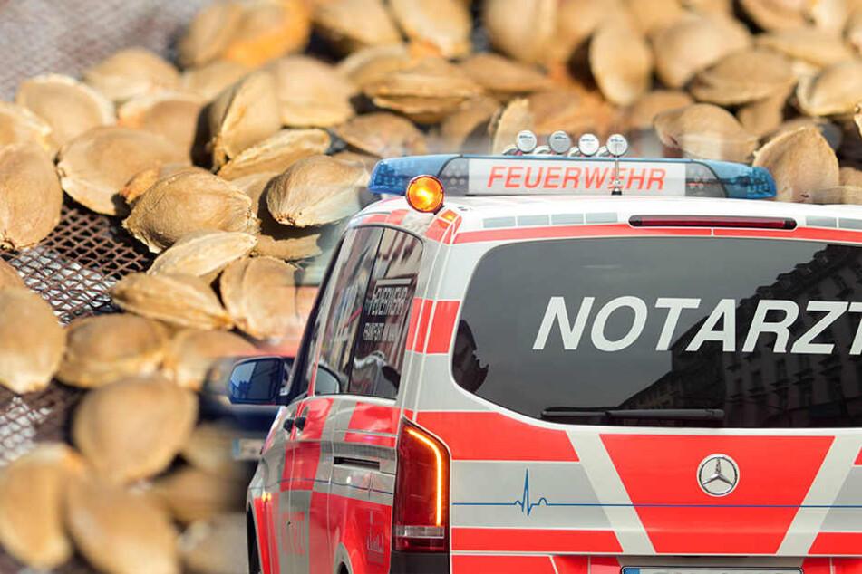 Alternative Medizin: Mann vergiftet sich mit Aprikosenkern-Extrakt