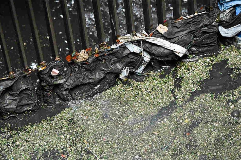Problematisch: So wie dieser Zulauf wurde jüngst das Gitter eines Kanals, der am Brühl in die Pleiße mündet, durch Feuchttücher verstopft.