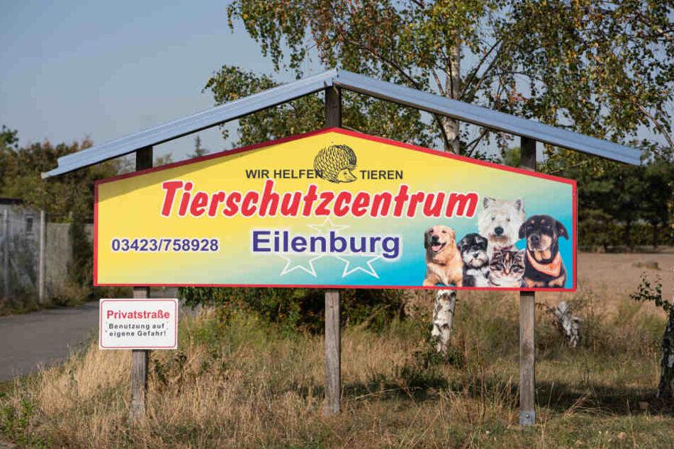 Im Tierschutzcentrum Eilenburg kümmern sich viele Freiwillige um ausgesetzte Haustiere und kranke Wildtiere.