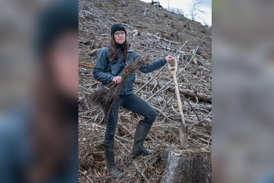 Forstwirtin Katharina Kretschmar (40) hält ein Bündel Eichensetzlinge in der Hand.