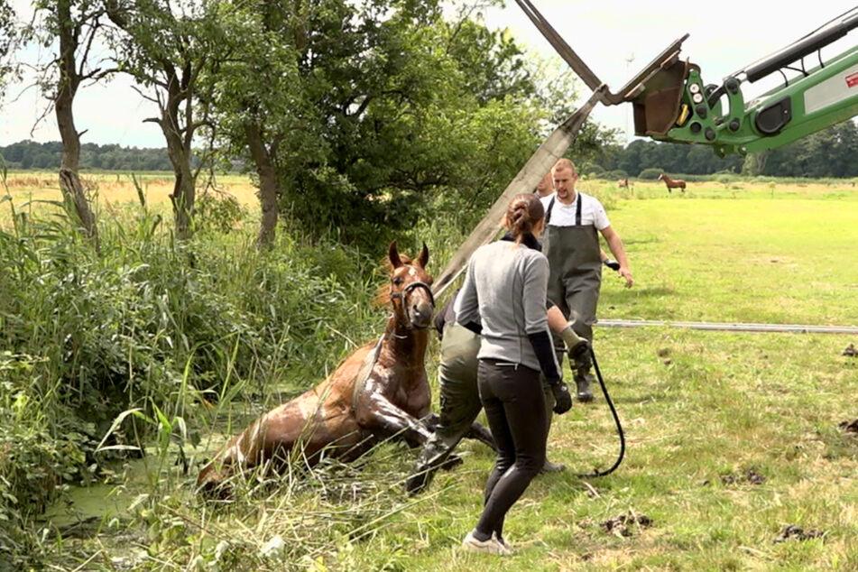 Mithilfe eines Traktors konnte das Pferd aus dem Graben gezogen werden.