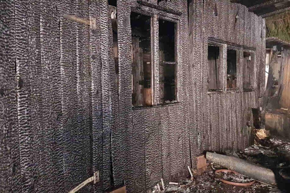 Viele Tiere hatten in den Flammen keine Chance, den Brand zu überleben.