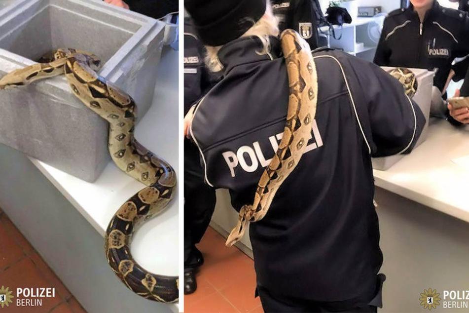 Berliner Polizeibeamte versuchten sich am Freitag als Schlangenbeschwörer.