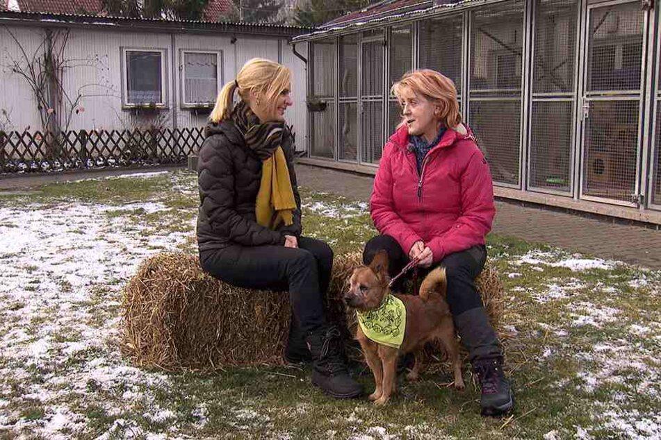 In der 1000. Sendung sucht Uta Bresan (52, l.) für Dackel-Mix Snoopy (7) aus dem Tierheim Erfurt ein neues Frauchen oder Herrchen.