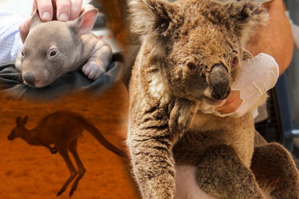 erotische geschichten mit tieren