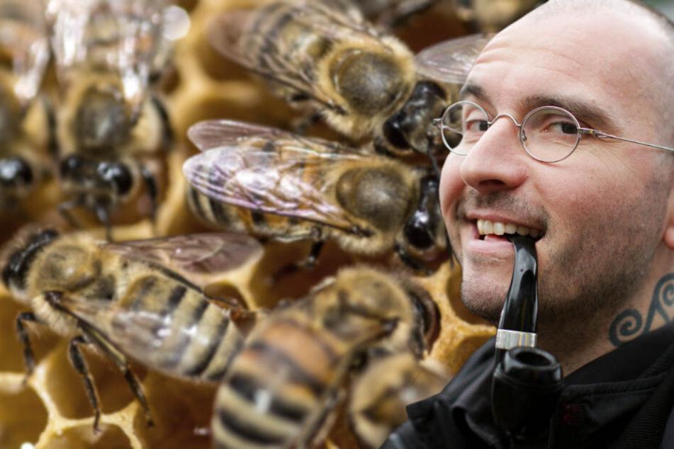 Winter deutlich zu mild: Wissenschaftler befürchten Folgen für Insekten und Allergiker