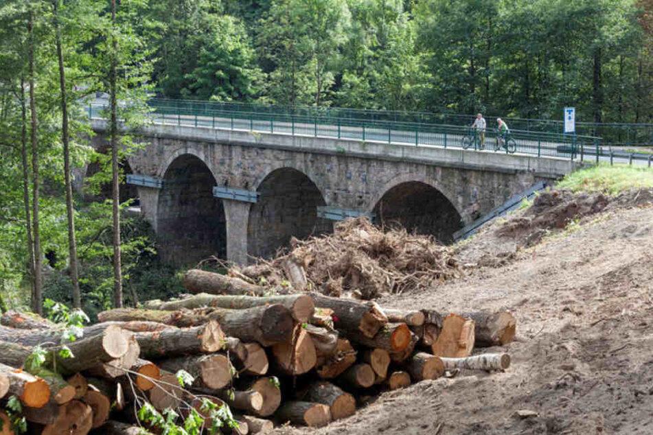 p.p1 {margin: 0.0px 0.0px 0.0px 0.0px; font: 12.0px 'Times New Roman'}    Für den Neubau der Muldenbrücke in Bockau werden Bäume gefällt, um Platz für die Baumaschinen zu schaffen.