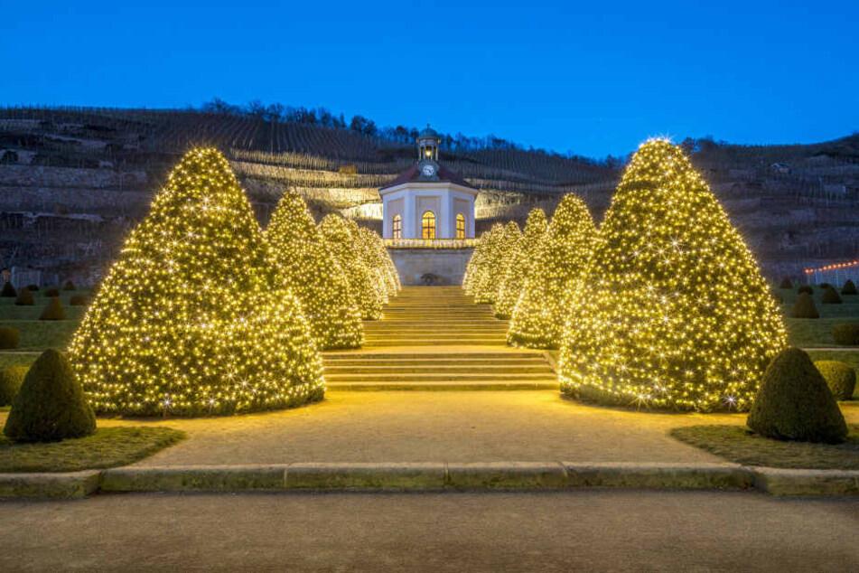 Auf Schloss Wackerbarth funkelt's schon weihnachtlich.