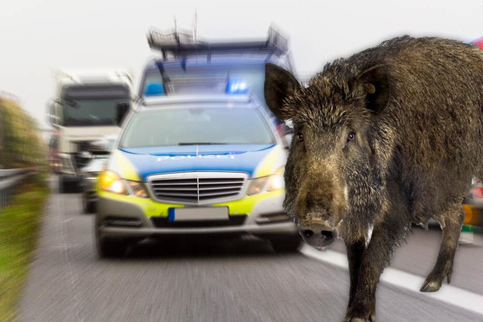 Kadaver überall auf der Fahrbahn: Auto kracht in Wildschweinrotte, sieben Tiere tot