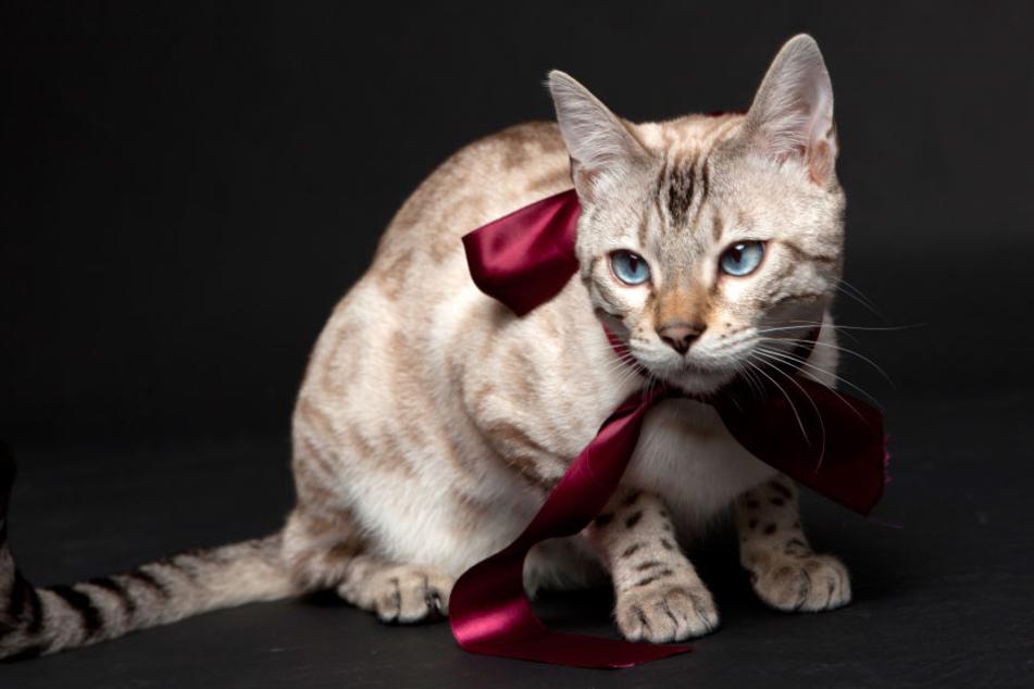 Damit Hund, Katze und Co. nicht unter dem Weihnachtsbaum landen, vermittelt das Tierheim Delitzsch vor Weihnachten keine Tiere mehr. (Symbolbild)
