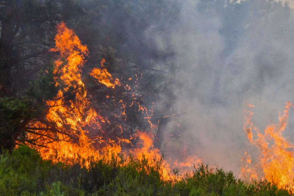 Aufgrund der Trockenheit konnten sich die Flammen schnell ausbreiten. (Symbolbild)