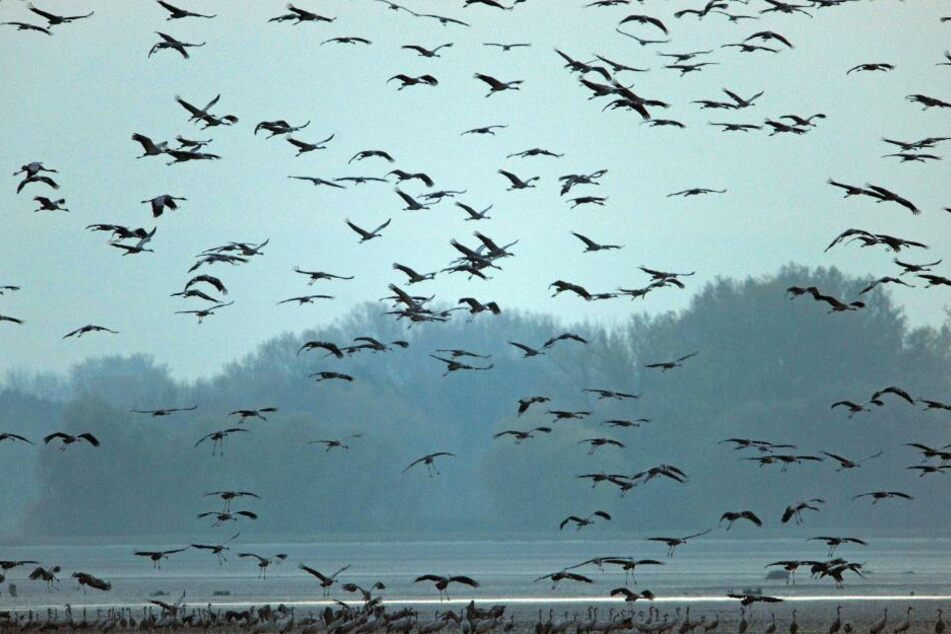Die Nahrungssuche wird für die Vögel immer schwerer. (Symbolbild)